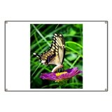 Beautiful Butterflys Banner