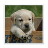 Puppy Golden Retriever Tile Coaster