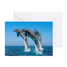 Three Dolphins Greeting Cards (Pk of 20)
