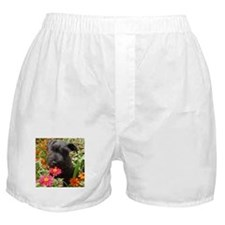 Black Miniature Schnauzer Boxer Shorts