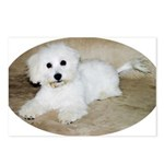 Coton De Tulear Postcards (Package of 8)