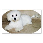 Coton De Tulear Rectangle Sticker