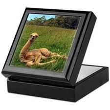 Reclining Alpaca Keepsake Box