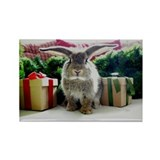 Cute rabbit & gifts Rectangle Magnet