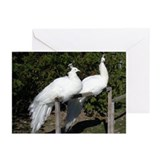White Peacock Greeting Cards (Pk of 10)