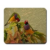 Lady Gouldian Finches Mousepad