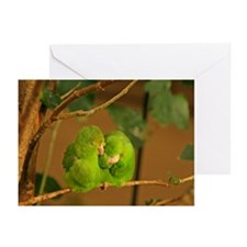 Adorable Parrotlets Greeting Cards (Pk of 20)