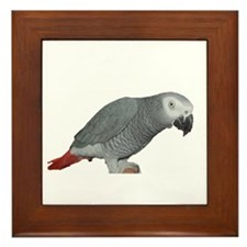 Cute Pet parrot Framed Tile