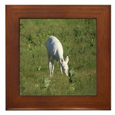 Rare White Deer Framed Tile