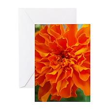 Love Card Orange Marigold