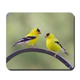 Goldfinches Mousepad