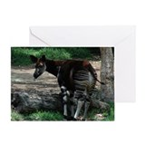 Okapi Greeting Card