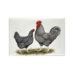 Cuckoo Marans Rectangle Magnet (10 pack)