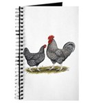 Cuckoo Marans Journal