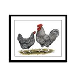Cuckoo Marans Framed Panel Print