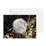 Seeking The Light Greeting Cards (Pk of 10)