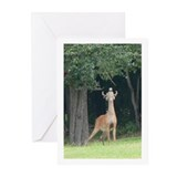 Deer Greeting Cards (Pk of 10)