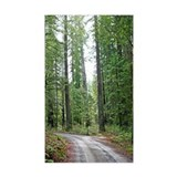 Through the Redwood Forest Decal