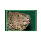 Neon Iguana Rectangle Magnet (10 pack)