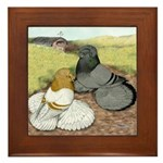 Trumpeter Pigeon Pair Framed Tile