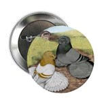 "Trumpeter Pigeon Pair 2.25"" Button"