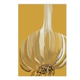 Garlic Postcards (Package of 8)