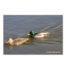 Mallards Postcards (Package of 8)