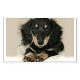Long Haired Puppy Rectangle Sticker 50 pk)