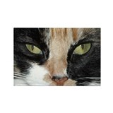 Calico Tiger Girls's Closeups Rectangle Magnet (10