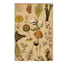Antique Botanical--Mushrooms Postcards (Pkg of 8)
