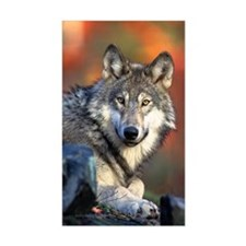 Wolf Photograph Rectangle Bumper Stickers