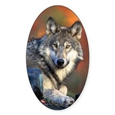 Wolf Photograph Oval Bumper Stickers