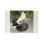 Swallow Pigeon In Field Rectangle Magnet (100 pack