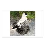 Swallow Pigeon In Field Postcards (Package of 8)