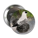 "Swallow Pigeon In Field 2.25"" Button"