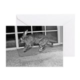 Hoppy Birthday Greeting Cards (Pk of 10)