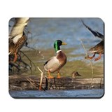 Mallard Flight Mousepad