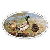 Mallard Ducks Decal