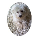 Coton On a Rug Oval Ornament