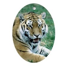 """Resting Tiger - B3"" Oval Ornament"