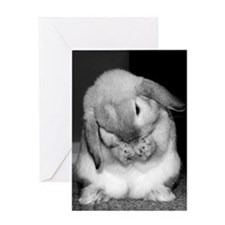 Bunny Birthday Wishes Greeting Card