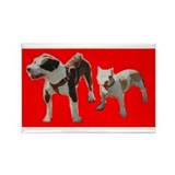 Pitbull Magnets (10 pack)