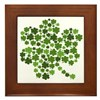 Shamrocks in a Shamrock Framed Tile
