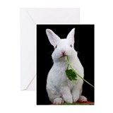 Baby Easter Bunny Greeting Cards (Pk of 10)