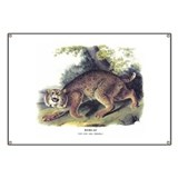 Audubon Bobcat Animal Banner