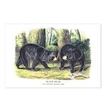 Audubon Black Bear Animal Postcards (Package of 8)