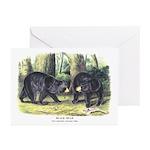 Audubon Black Bear Animal Greeting Cards (Pk of 20