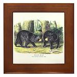 Audubon Black Bear Animal Framed Tile