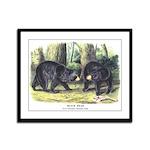 Audubon Black Bear Animal Framed Panel Print