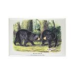 Audubon Black Bear Animal Rectangle Magnet (10 pac
